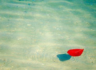 levél a tengerben