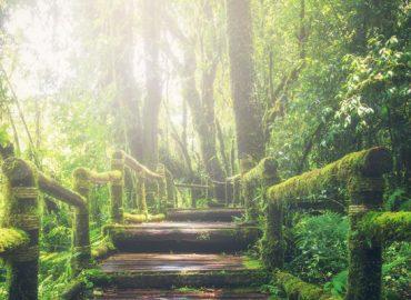 híd zöldben